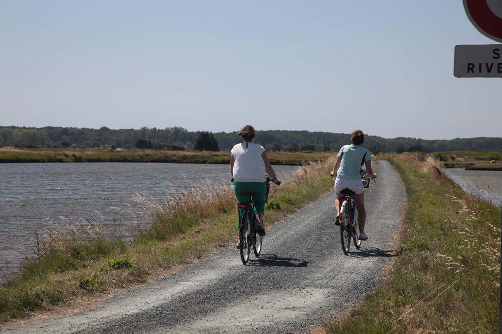 Pistes cyclables à travers les marais