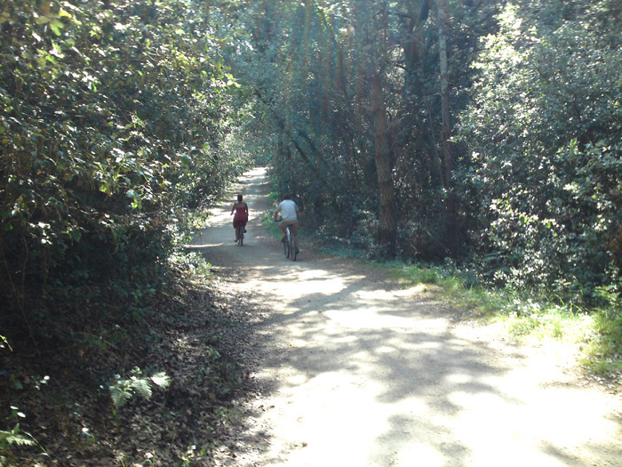 Pistes cyclables en forêt