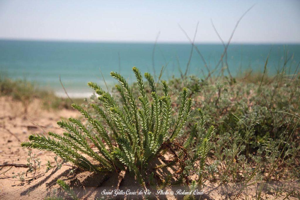 Saint Gilles Croix de Vie dunes
